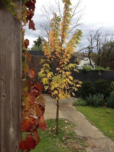 DUNK_BlogPost_Garden.jpg